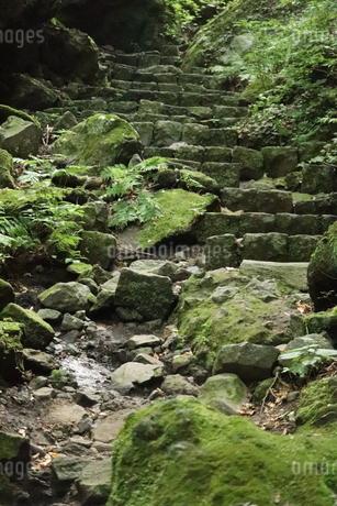 森の階段の写真素材 [FYI04290819]