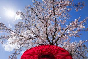 日本の春の写真素材 [FYI04290830]