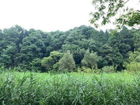 自然公園の写真素材 [FYI04290970]