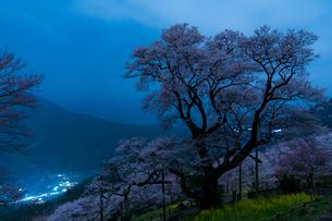 ひょうたん桜の写真素材 [FYI04291002]