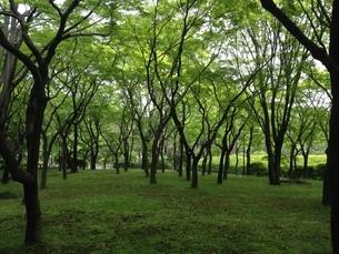 自然公園の写真素材 [FYI04291003]