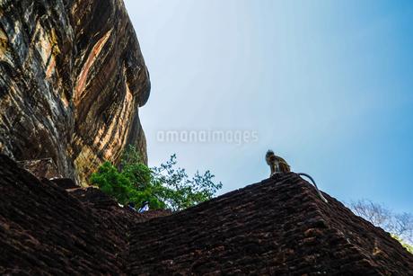猿(スリランカ・シーギリヤロック)の写真素材 [FYI04291131]