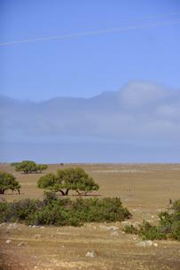 西オーストラリア州の木と雲のある景観の写真素材 [FYI04291167]