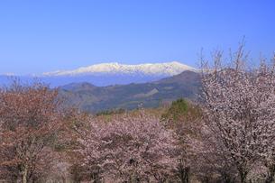 桜峠の写真素材 [FYI04291250]