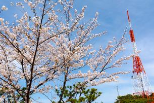 五台山の桜の写真素材 [FYI04291256]