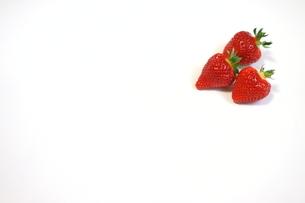 コピースペースのある白背景に真っ赤な完熟の苺、越後姫が3粒の写真素材 [FYI04291289]
