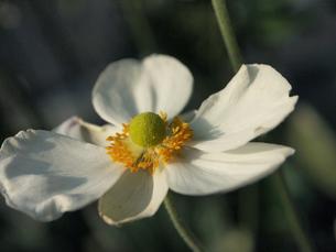 花の写真素材 [FYI04291307]