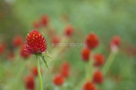 花の写真素材 [FYI04291313]
