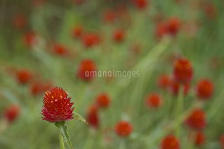 花の写真素材 [FYI04291314]