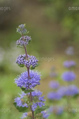 花の写真素材 [FYI04291315]