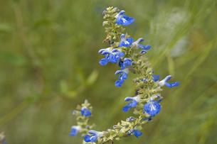 花の写真素材 [FYI04291323]