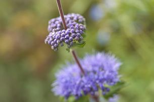 花の写真素材 [FYI04291326]