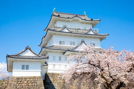 小田原城と桜の写真素材 [FYI04291610]