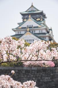 大阪城・桜視線の写真素材 [FYI04291701]
