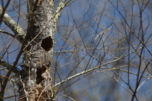 木の幹に開けられた穴の写真素材 [FYI04291950]