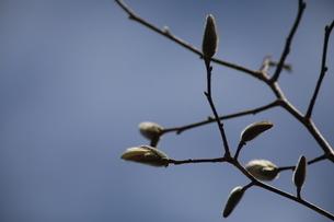 春の芽吹きの写真素材 [FYI04291982]