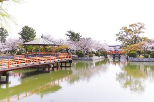 九華公園の桜の写真素材 [FYI04292090]