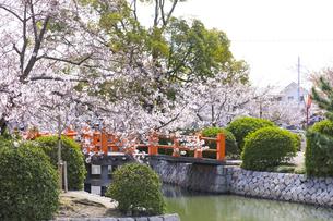 九華公園の桜の写真素材 [FYI04292093]