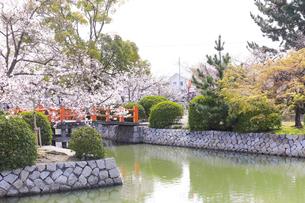 九華公園の桜の写真素材 [FYI04292096]
