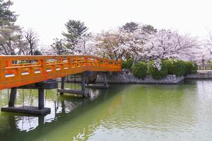 九華公園の桜の写真素材 [FYI04292101]