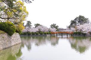 九華公園の桜の写真素材 [FYI04292104]