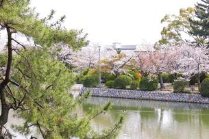 九華公園の桜の写真素材 [FYI04292106]