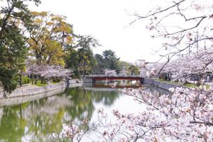 九華公園の桜の写真素材 [FYI04292110]