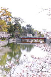 九華公園の桜の写真素材 [FYI04292112]
