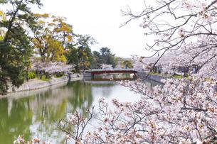 九華公園の桜の写真素材 [FYI04292115]