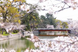九華公園の桜の写真素材 [FYI04292117]