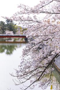九華公園の桜の写真素材 [FYI04292120]