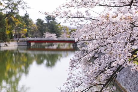九華公園の桜の写真素材 [FYI04292121]