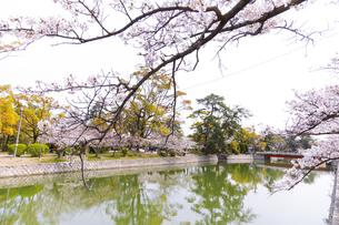 九華公園の桜の写真素材 [FYI04292123]