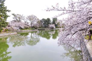 九華公園の桜の写真素材 [FYI04292125]