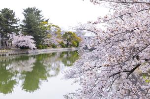 九華公園の桜の写真素材 [FYI04292129]