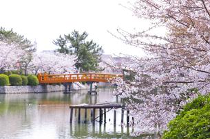九華公園の桜の写真素材 [FYI04292131]