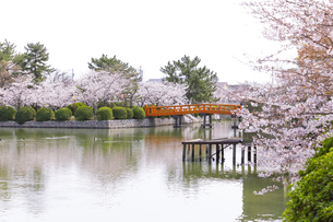 九華公園の桜の写真素材 [FYI04292133]