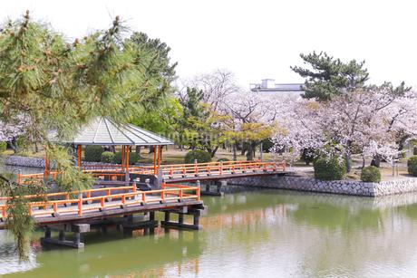 九華公園の桜の写真素材 [FYI04292137]