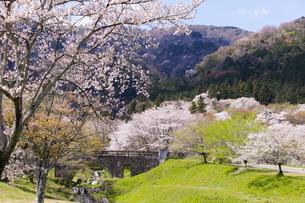 霞間ヶ関の桜の写真素材 [FYI04292139]