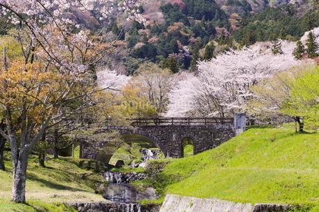霞間ヶ関の桜の写真素材 [FYI04292142]