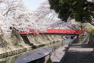 大垣 奥の細道むすびの地の桜の写真素材 [FYI04292189]