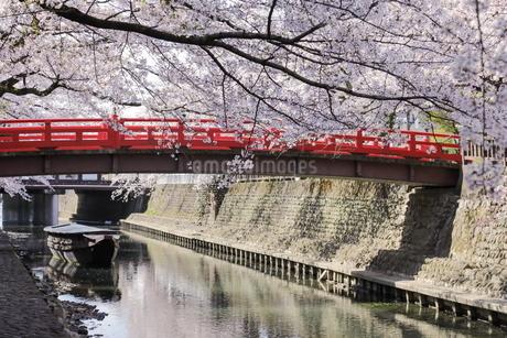 大垣 奥の細道むすびの地の桜の写真素材 [FYI04292201]