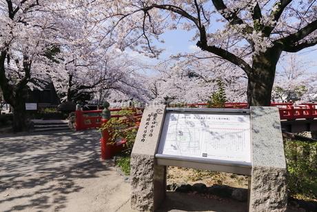 大垣 奥の細道むすびの地の桜の写真素材 [FYI04292204]