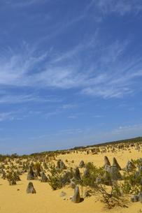 オーストラリア・西オーストラリア州にあるナンバン国立公園内の砂漠に広がる奇岩群のピナクルズの写真素材 [FYI04292639]