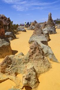 オーストラリア・西オーストラリア州にあるナンバン国立公園内の砂漠に広がる奇岩群のピナクルズの写真素材 [FYI04292662]