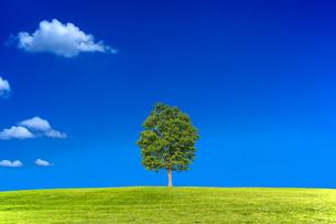 雲のある青空を背景にした丘の上の1本の木。背景用素材の写真素材 [FYI04292706]