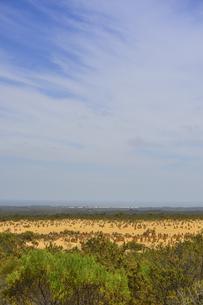 オーストラリア・西オーストラリア州にあるナンバン国立公園内の砂漠に広がる奇岩群のピナクルズの写真素材 [FYI04292710]