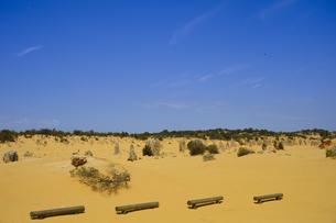 オーストラリア・西オーストラリア州にあるナンバン国立公園内の砂漠に広がる奇岩群のピナクルズに置かれた木製のベンチの写真素材 [FYI04292724]