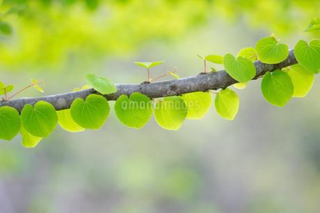 新緑の写真素材 [FYI04292765]