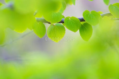 新緑の写真素材 [FYI04292766]